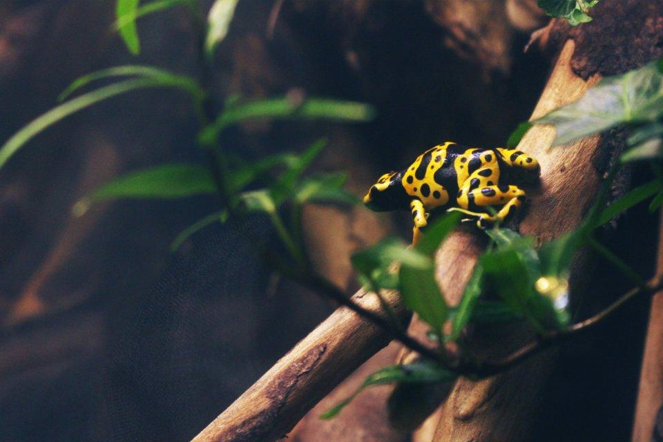 An application to identify amphibians