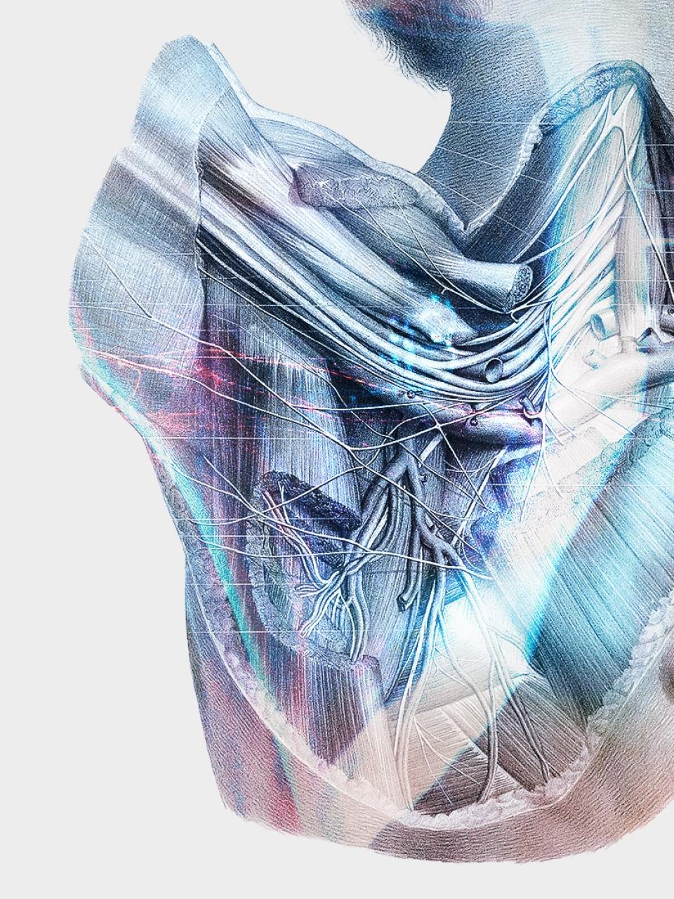 A solution to detect a brachial plexus on an ultrasound image